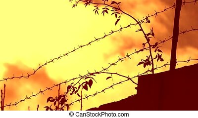 barbed wire prison sunset swinging tree branch - barbed wire...
