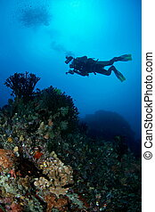 underwater seascapes - A pristine and beautiful underwater...