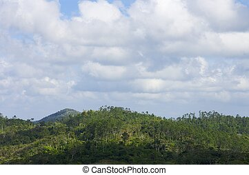 Rainforest - Sierra de Escambray; Provincia de Villa Clara;...