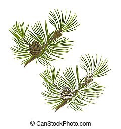 Pine tree branch with pine cones with snow vectoreps -...