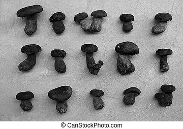 black and white wild bolete mushrooms in variety shape