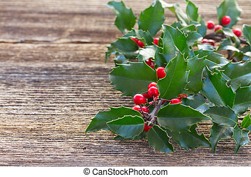 Fresh Holly branch