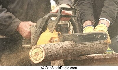 Men cutting wood logs with chainsaw, lumberjack in action...