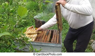 Extract cells with honey from the hive - Beekeeper neat...