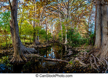Fall Foliage Cibolo Creek, TX - High Resolution Panoramic...