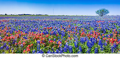 Panorama of Texas Wildflowers - A Wide Angle High Resolution...