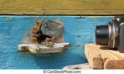 Pictures and video of bees at the e - Not always possible to...