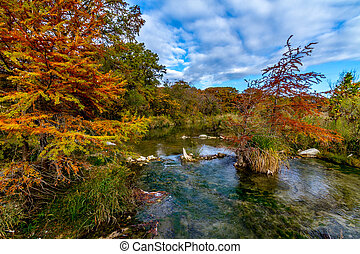 Autumn on the Guadalupe River TX - Cypress Trees with...