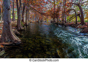 Autumn on the Guadalupe River Texas - Cypress Trees with...