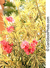Tropical flowering bush on a background the leaves of palms