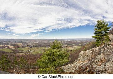 Appalachian Mountain Pine