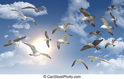 Seagull Flying - Sea gull flying through the air during a...