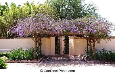 Purple vine arbor - Wisteria growing over an arbor