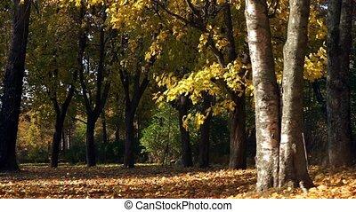 Autumn park with sun beam
