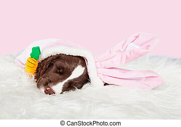 Cute Easter Bunny Puppy - Adorable sleeping eight week old...