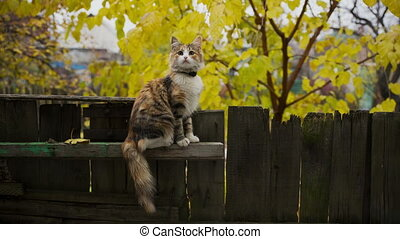 Cat on Fence - Cute cat sitting on a fence