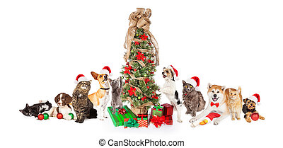 Group of Cats and Dogs Around Christmas Tree