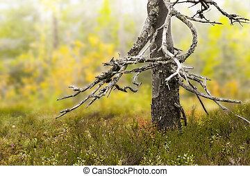 Dry trunk of dead tree