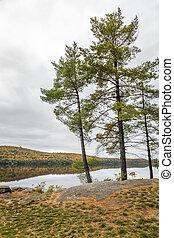 White Pine Trees Bordering a Lake in Autumn - Ontario,...