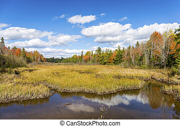 Autumn Bog and Fall Colors - Ontario, Canada - Autumn Bog...