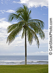 Palm tree, lawn and Pacific Ocean in Riviera Nayarit, Mexico