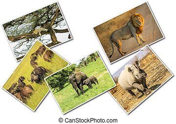 African animals collage - African Big Five animals collage,...