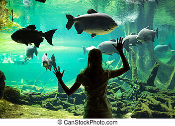 Woman at the oceanarium - Silhouette of young woman watching...