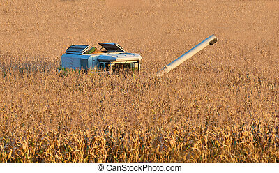 combine harvester on field - a combine harvester while...