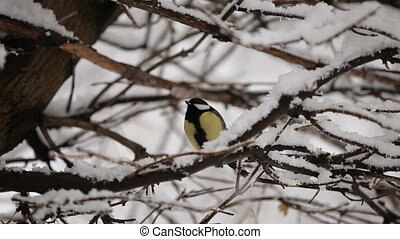 Lone Titmouse Sitting On A Snow Covered Tree - In the frame...