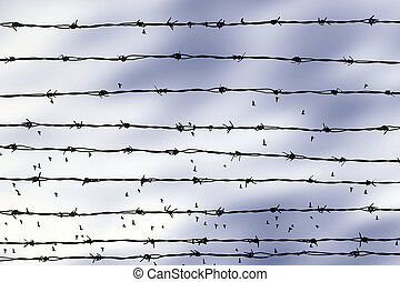 freedom - birds flying beyond the barbed wire