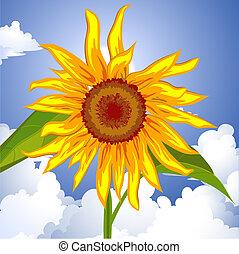 Sunflower on the sky
