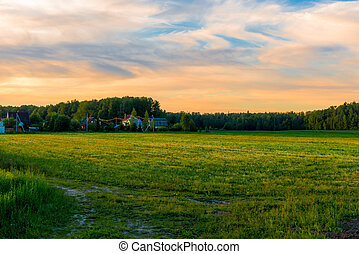 beautiful green field at sunset in the spring