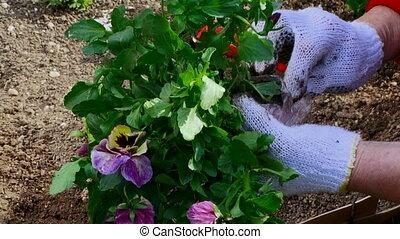 Flora - Gardener planting a new flower