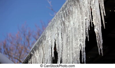 Row Of Long Melting Icicles At Thaw Time