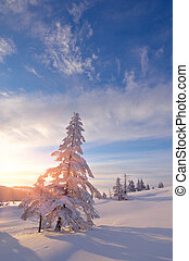 Snowy trees in winter - Snowy trees Winter landscape in the...
