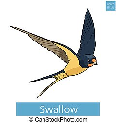 Swallow learn birds educational game vector