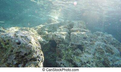 Underwater scenery - Diving Underwater footage Shot in...