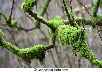 Nature Abstract - Abstract view of vibrant green moss...