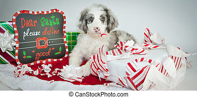 Bad Christmas Puppy - Silly Aussie Doodle puppy laying next...