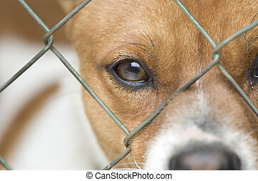 Dog behind wire mesh - Close up of dog's face behind wire...