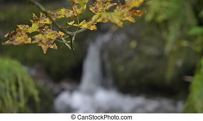 Waterfall behind autumn leaves.