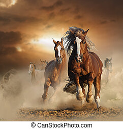 Two wild chestnut horses running together in dust, front...