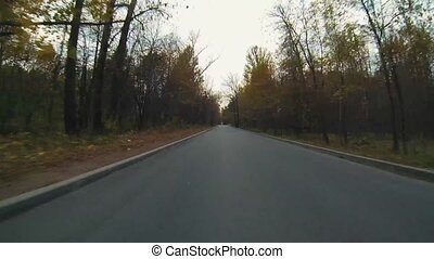 Autumn scene with road in forest at Park - Autumn scene with...