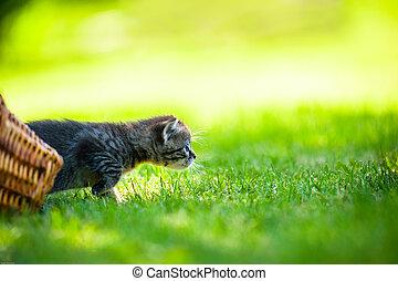 little kitten, outdoor - Cute little meowing kitten in the...