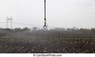 sprayer sprays water on field with young cabbage - The spray...