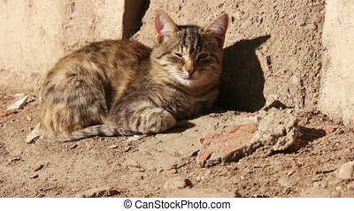 Cat lying in the sunny day near wall