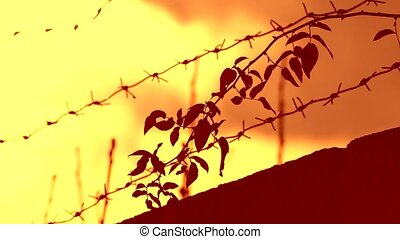 barbed wire prison sunset swinging tree branch orange...