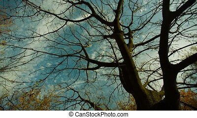 Autumn Tree - Scenic view of naked branches