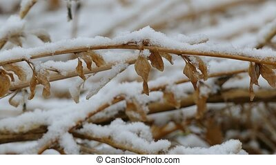 winter snow dry frozen grass nature background - winter snow...