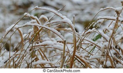 winter snow frozen grass nature dry background - winter snow...